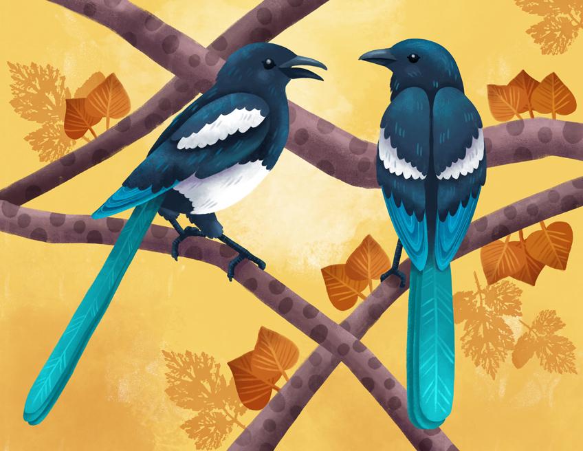Birds folktale: magpies illustrations