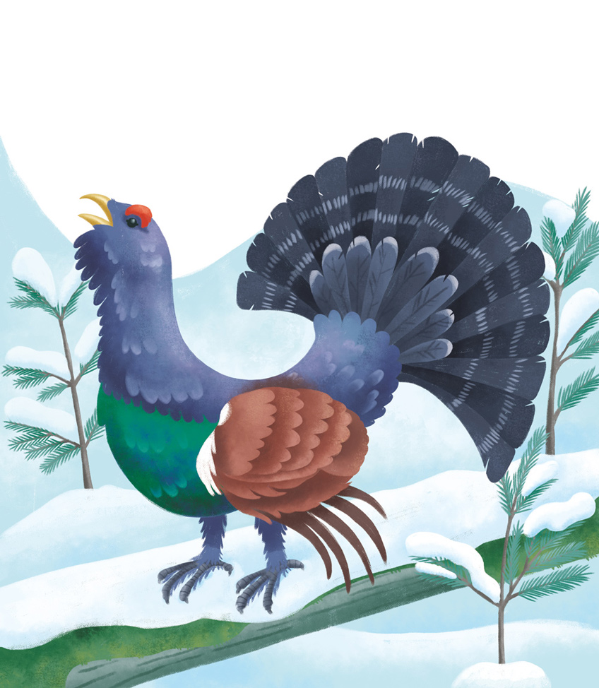 Illustration of a capercaillie