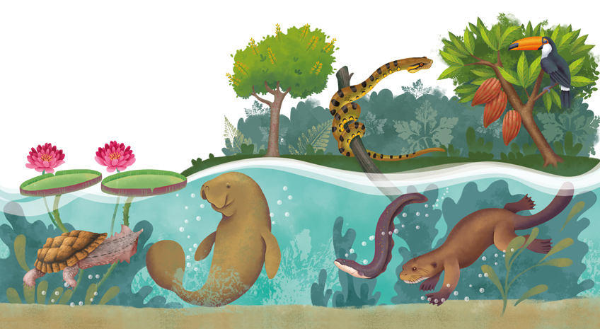 Illustration of the Amazon River Ecosystem with a manatee, a giant otter, a toucan, victoria amazonica flower