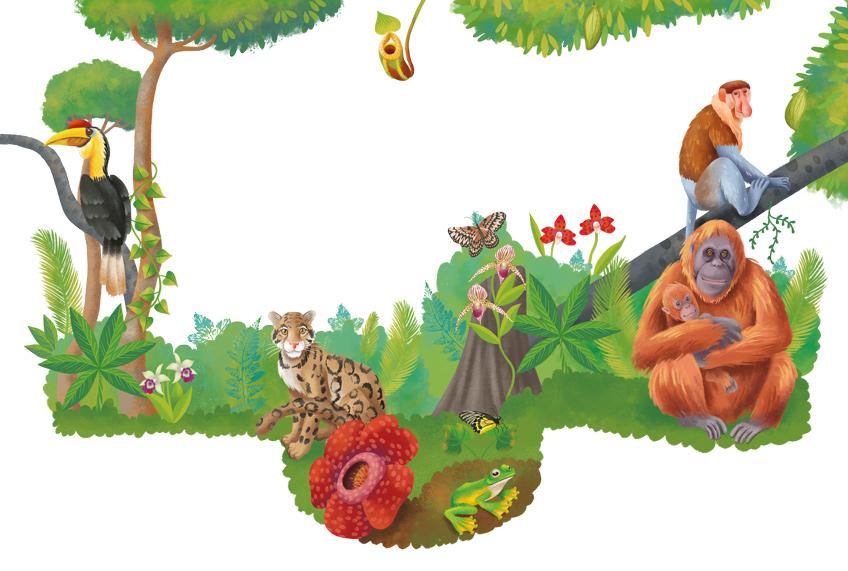 Illustration of the Borneo forest with an orangutan, a clouded leopard, proboscis monkey and a Rafflesia arnoldii