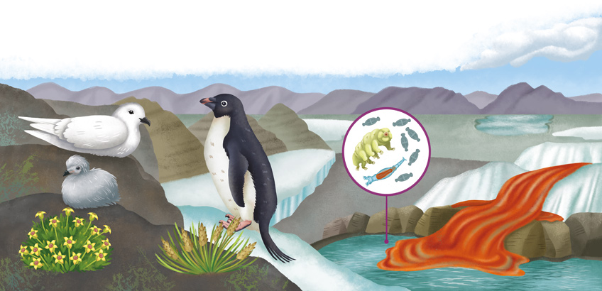 Illustration Antarctica ecosystem with a penguin, a snow petrel, Antarctic pearlwort, bacteria and a red waterfall