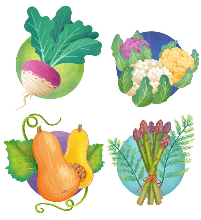 Colorful illustration of a turnip, a cauliflower, a butternut squash, a bunch of asparagus