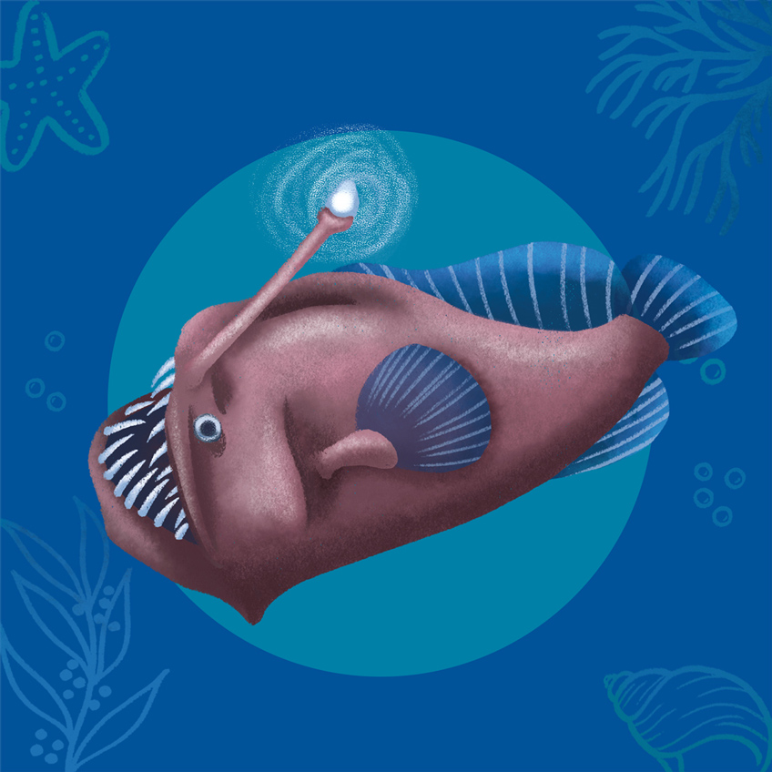 An illustration of a black devil deep sea fish