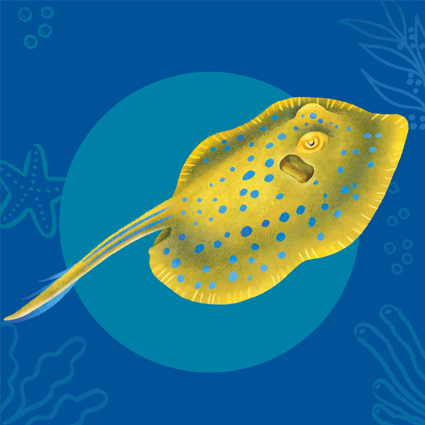 Blue spotted ribbontail. A yellow ray with blue spots.