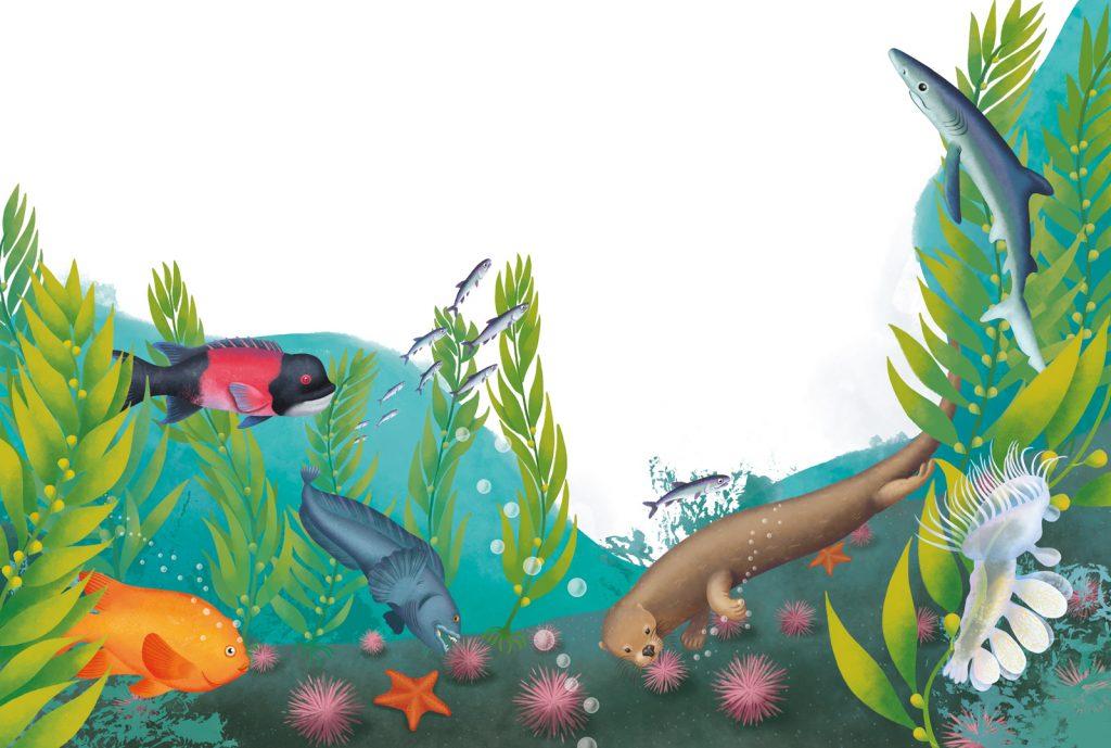 kelp forest ecosystem: otter, garibaldi fish, sea urchins and sea star